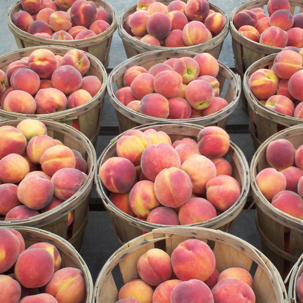 Peaches In Baskets